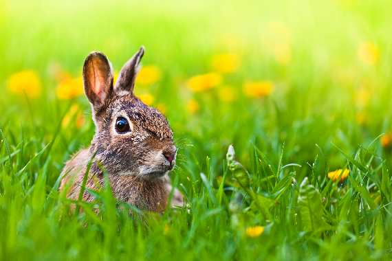 Easter Bunny in a Meadow