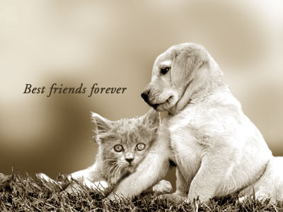 Best friendsYou Are My Best Friend Forever Images