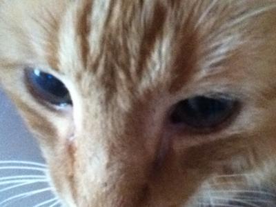 MY CAT MAX
